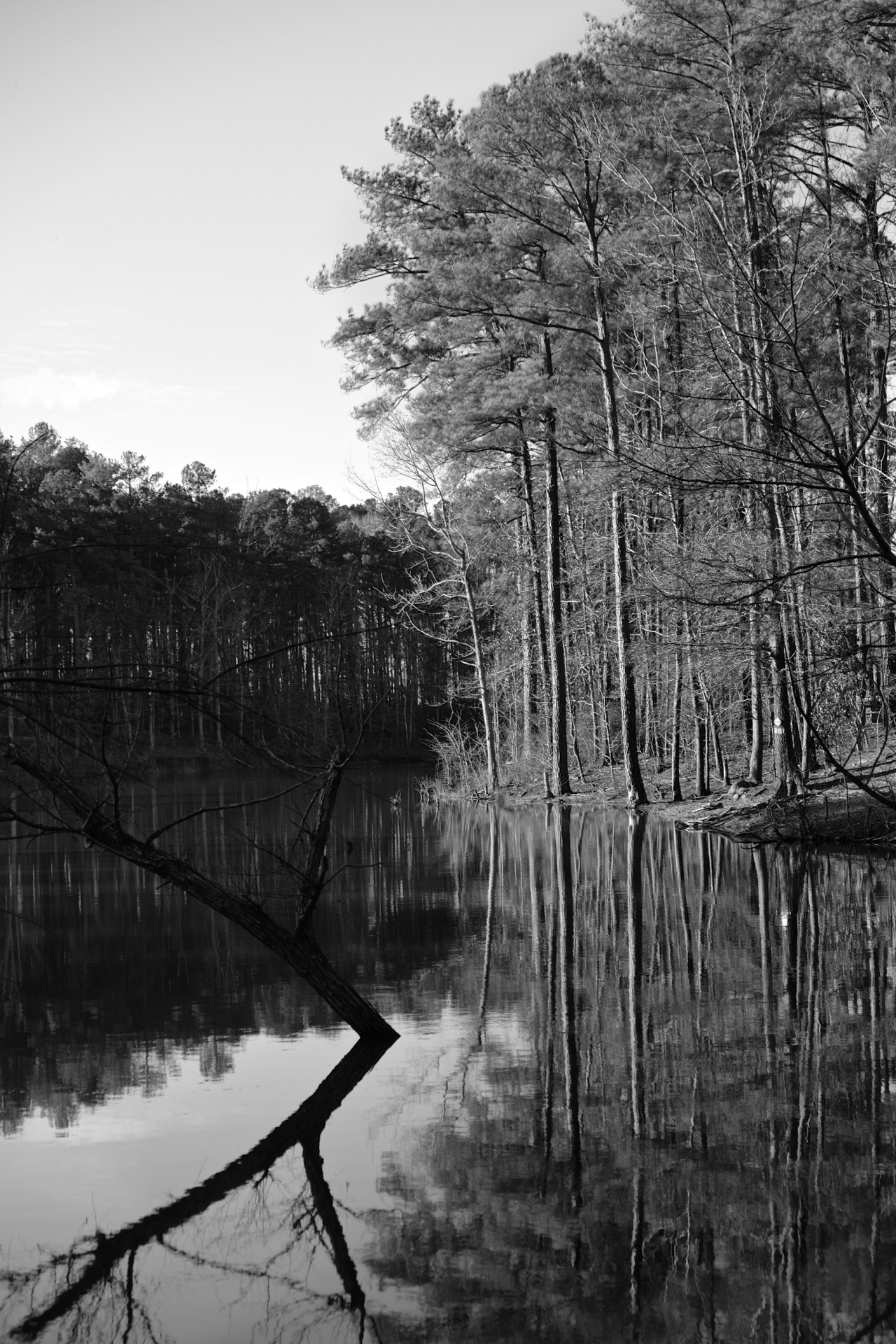 black and white scene of a forest up to the edge of a lake