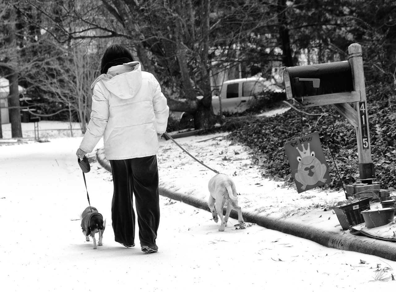 woman from behind on a snowy street walking two dogs