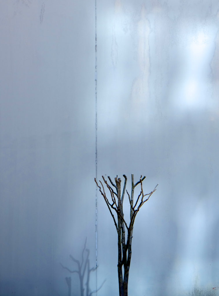 Artistic photo of pruned bush and light reflections on a wall in blue tones