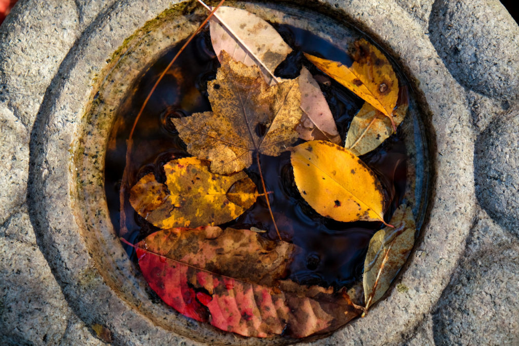 circular stone vase with water and fall leaves floating